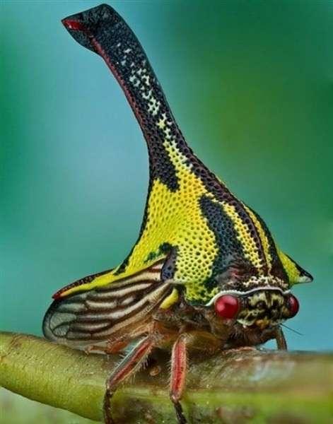 Dünyanın en ilginç canlıları