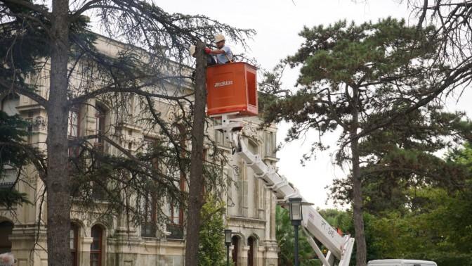 İzmit Belediyesi Tehlike Arz Eden Ağaçlar İçin Önlem Alıyor